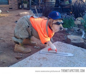 Dog costume---Construction worker
