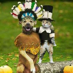 Dog costume---Thanksgiving