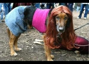 dog costume--Jersey Girl