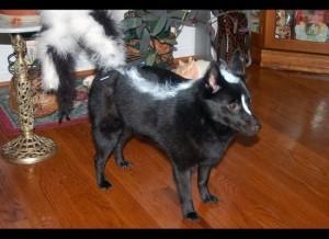 dog costume--skunk