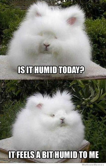humidity-
